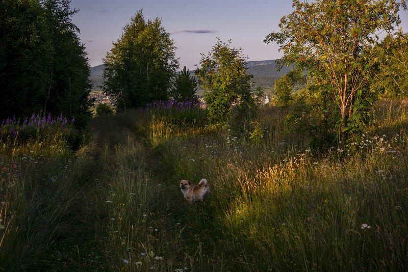 На прогулке.photo preview