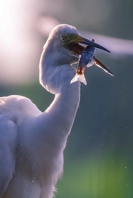 Удачная рыбалка фото превью