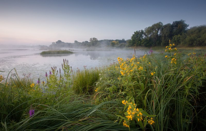 природа утро солнце туман деревья *** фото превью