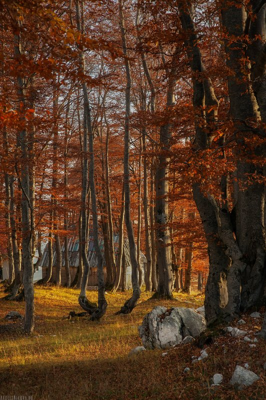 пейзаж, черногория, путешествие, лес, природа, осень, утро, рассвет Осеннее утроphoto preview