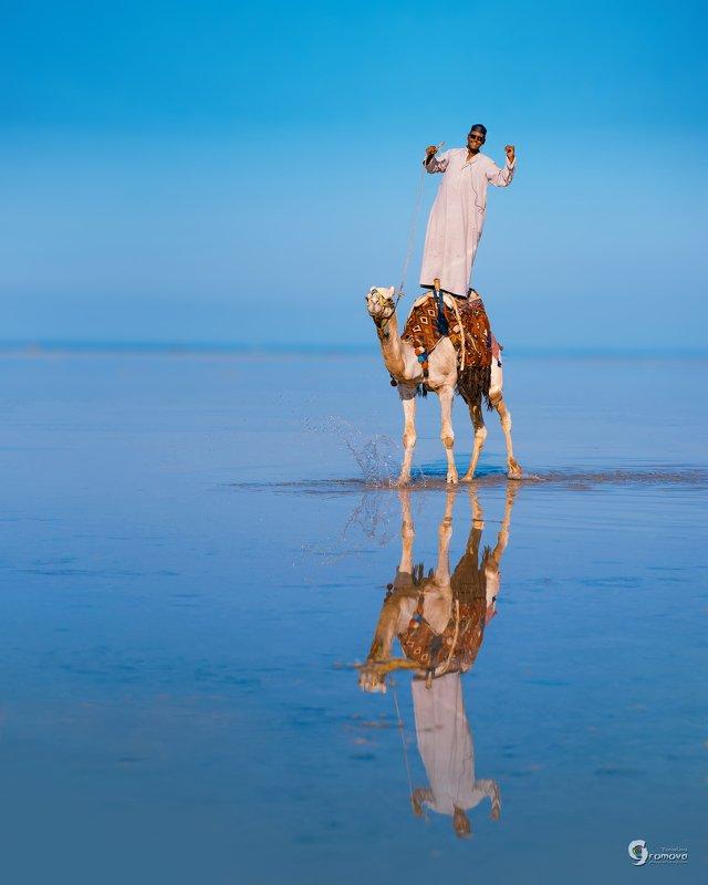 верблюд, погонщик, Красное море, отлив, кораллы, горизонт, море Корабль пустыниphoto preview