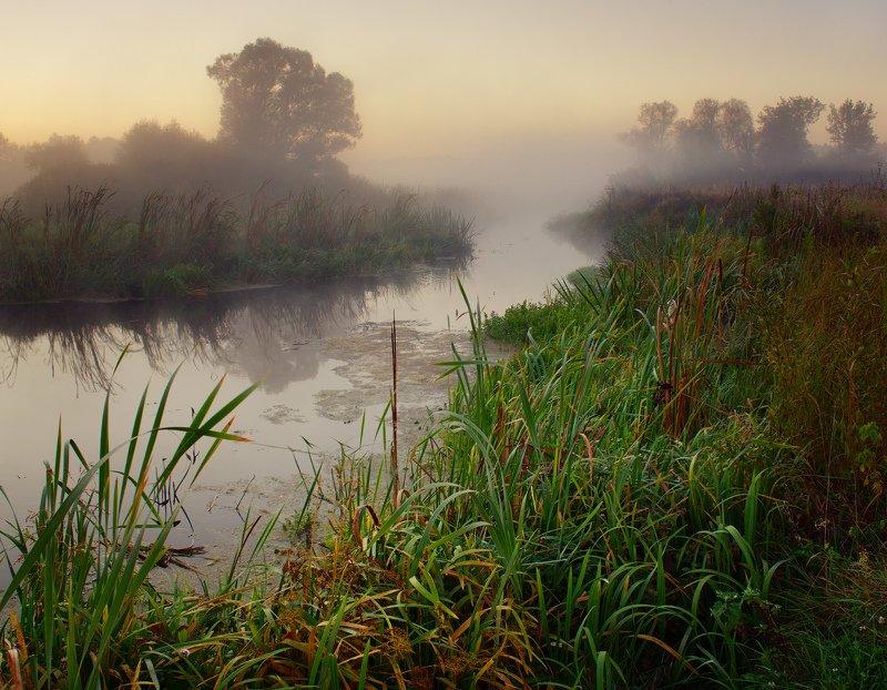 рассвет, пейзаж, волчья, туман, река, утро, dawn, landscape, fog, river, morning Река Волчья на рассветеphoto preview