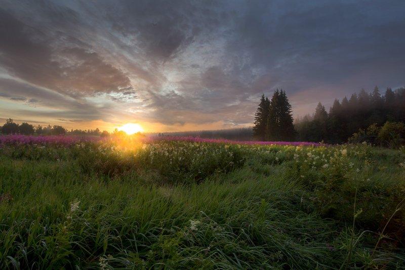 кипрей, лето, туман , поле, луг, рассвет ,карелия На рассветеphoto preview