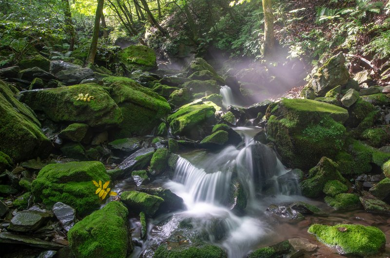moss, nature,waterfalls,water,green,light Valley of lightphoto preview