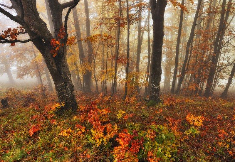 сказочный лес фото превью
