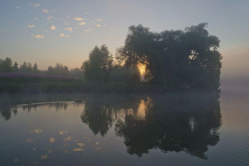 утро, лето, кипрей, пейзаж Кипрей на другом берегуphoto preview