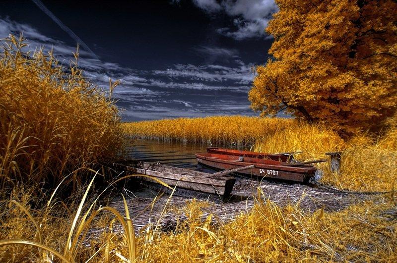 infrared,ик-фото,инфракрасное фото, инфракрасная фотография, пейзаж, лето Флот.photo preview