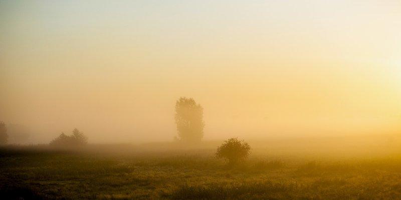 утро, рассвет, туман, пейзаж, поле, лето Туманное утроphoto preview