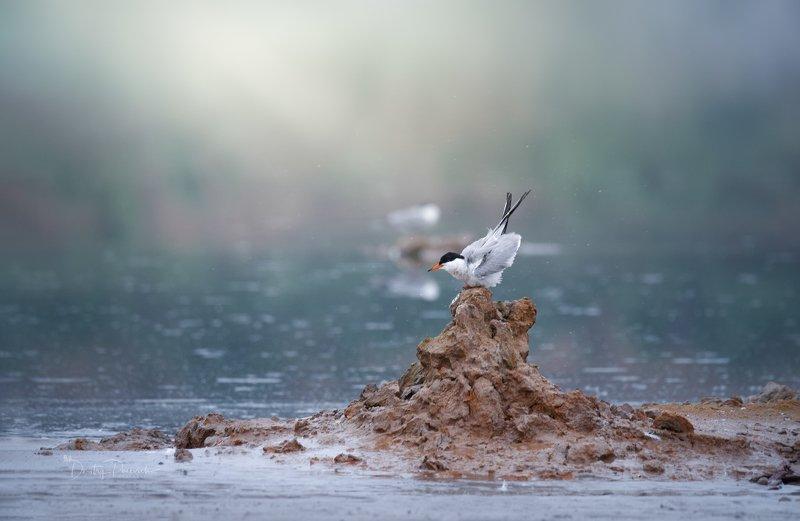 природа, лес, животные, птицы На пьедестале фото превью