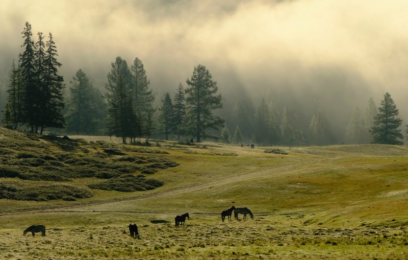 Алтайское утро фото превью