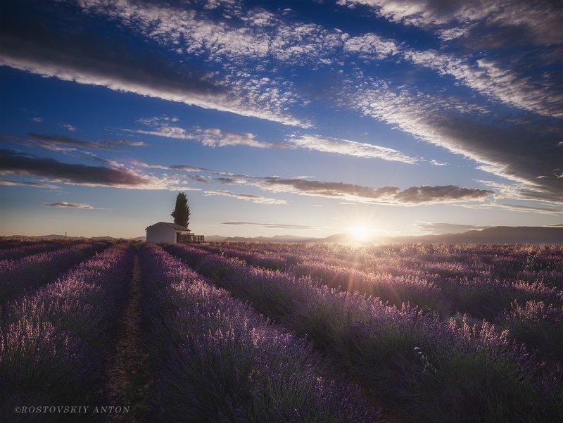 Прованс, лаванда, поле, утро, восход, Provence, Valensole, France, triplaunch.ru,  Первые лучиphoto preview