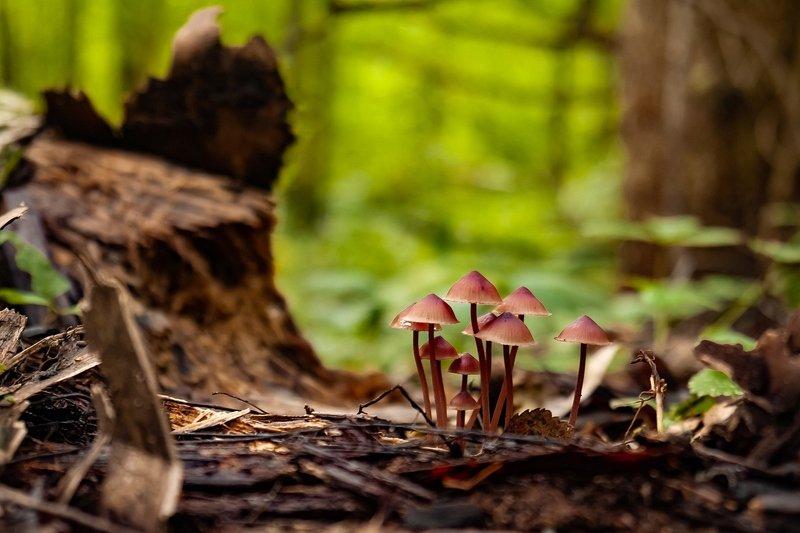 макро,грибы Вышли на прогулкуphoto preview