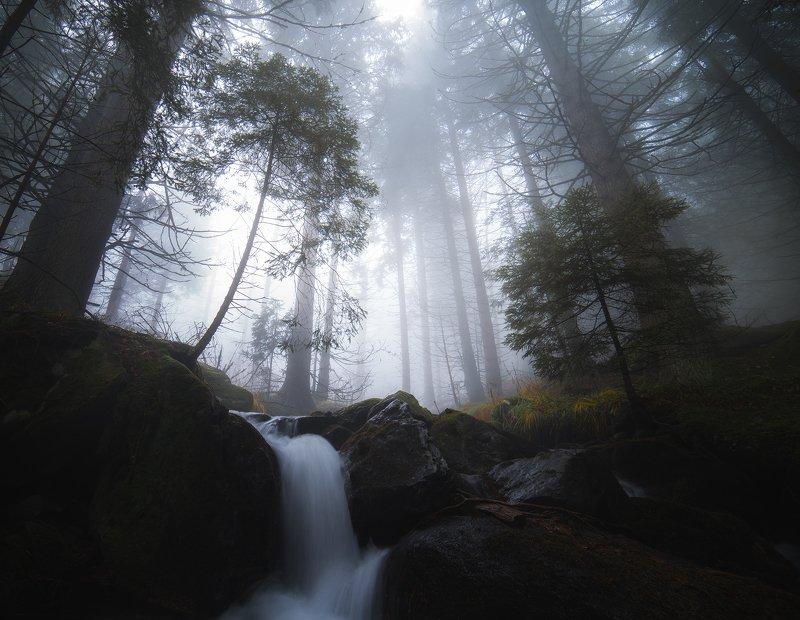 Волшебный лес фото превью