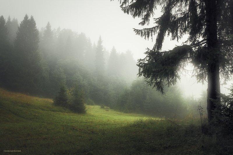 туман, утро, лес, поле, лето Нежность туманного утра фото превью