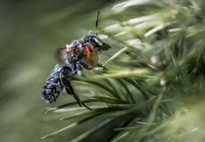 природа, макро, лето, насекомое, елка Начало ветраphoto preview