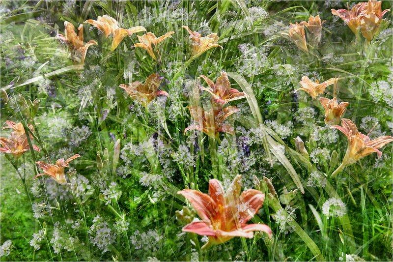 лилейник, цветок, цветы, лето, июль, Июльский микс.photo preview