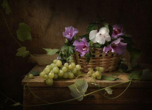 Мальва и виноград