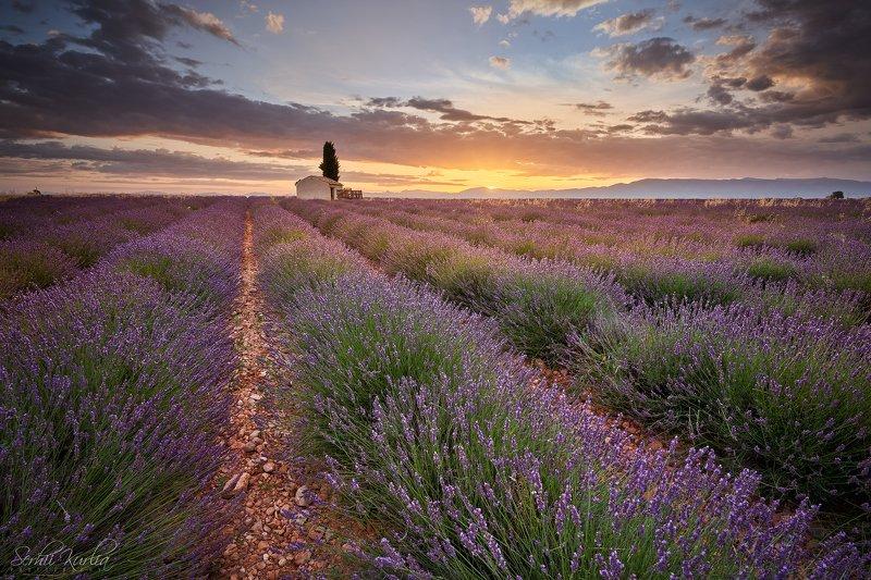 прованс, франция, рассвет, sunrise, provence, france, valensole, fields, lavander Сезонная ...photo preview