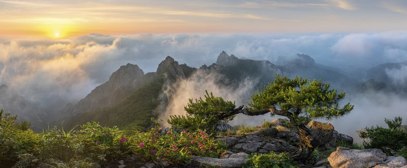 mountains,peak,hiking,fog,clouds,blossom,light,wolchulsan The revelation of the treephoto preview