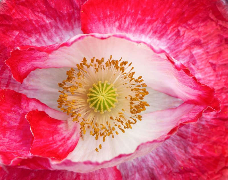poppy,summer,red,colors I\'m looking at you, WORLD!photo preview