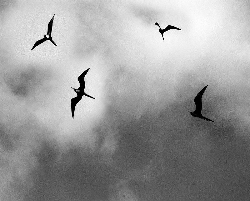 Полет в бурю Буревестникиphoto preview