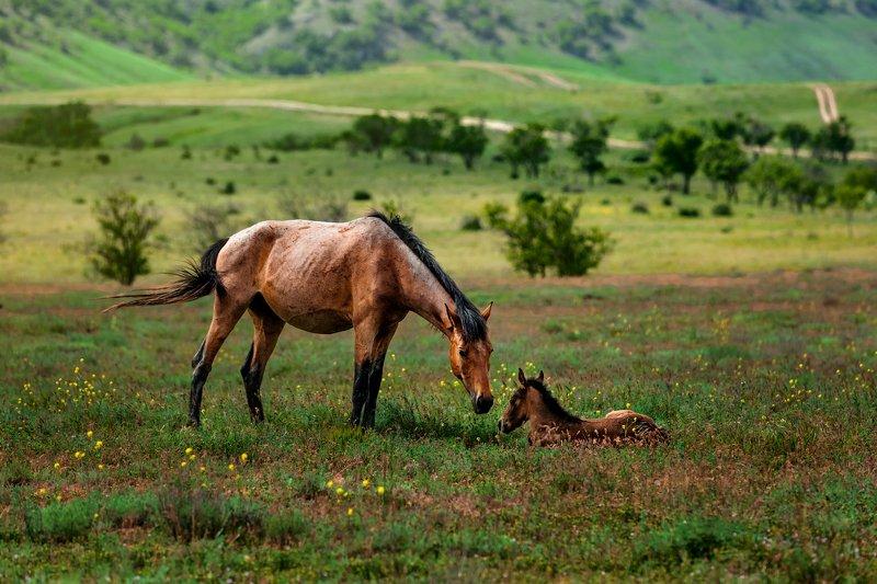 Мама-лошадьphoto preview