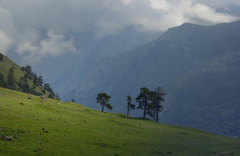 горы лето кавказ маруха Лето в горахphoto preview