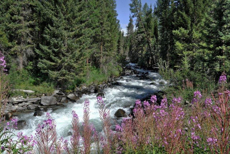 У таёжной рекиphoto preview