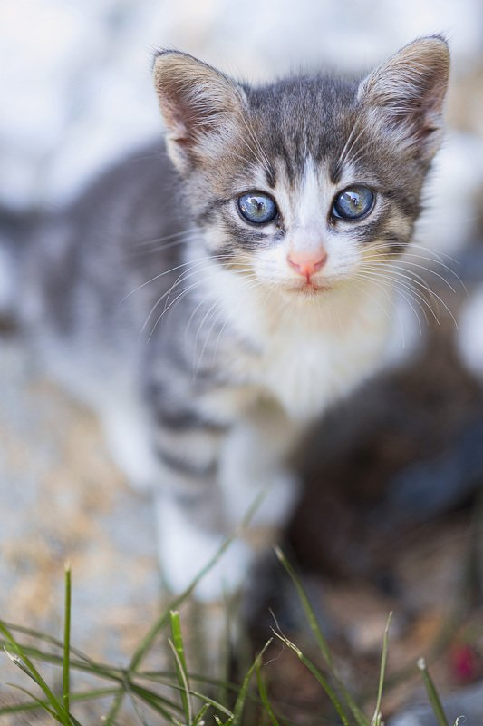 babycat photo preview