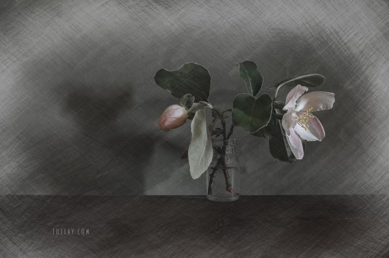 весна во флаконе, пузырек, розовые цветки, цветки айвы Настроение Айва #3photo preview
