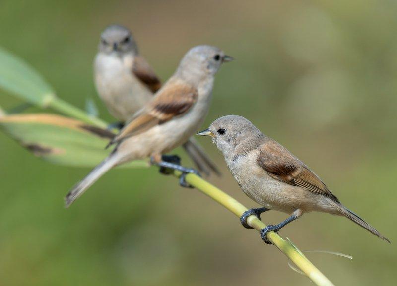 птицы,природа,лето Молодые ремезыphoto preview