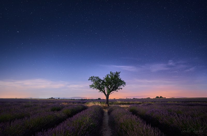 .. through the purple field to the starsphoto preview