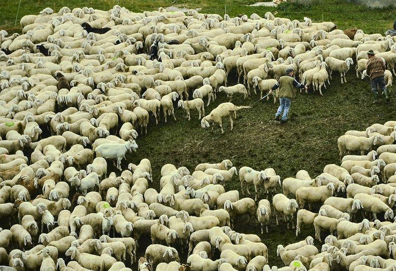 Гора,овцы,работа,Италия Где-то в Италииphoto preview