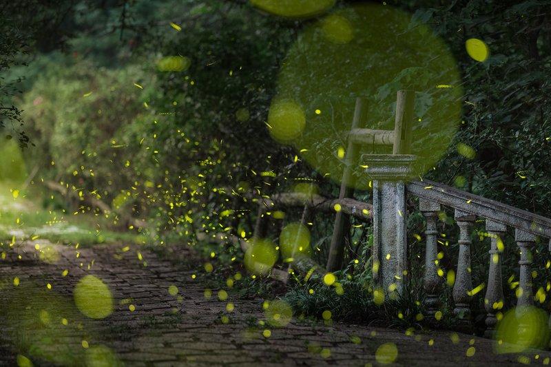 nanjing Fireflies фото превью