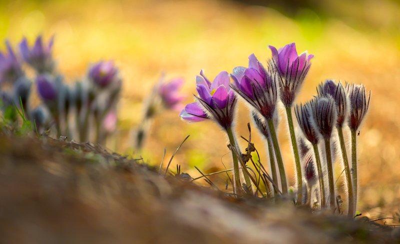 весна, цветы, сон-, трава Под палящим солнцемphoto preview