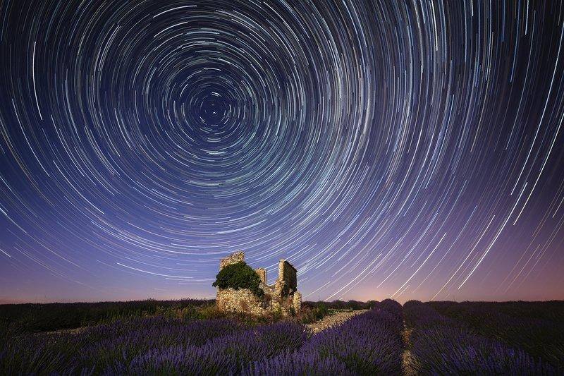 Lavender nightphoto preview