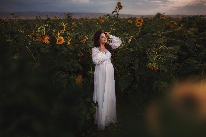 беременность подсолнухи лето В ожидании чудаphoto preview