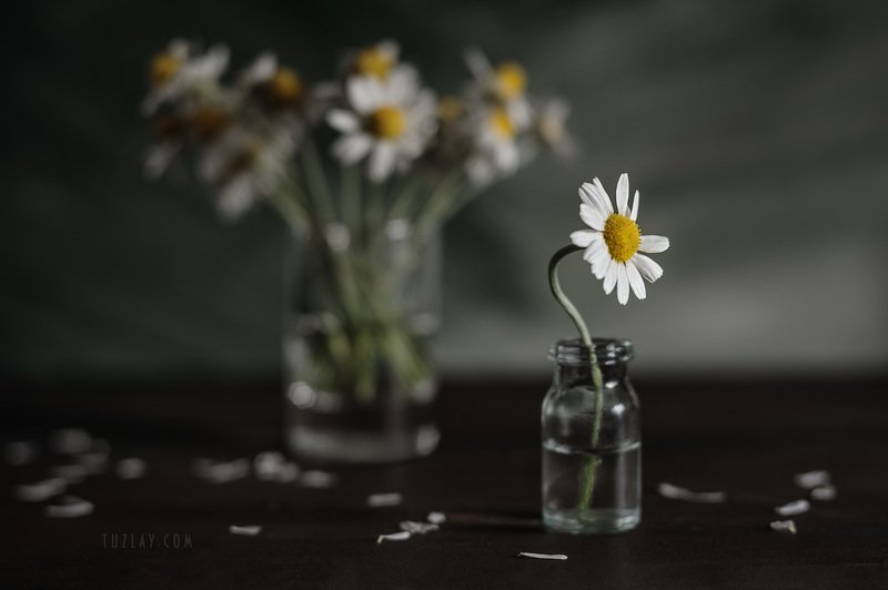 ромашки, белые ромашки, софт фокус, боке, весна во флаконе, пузырёк И снова про ромашки на столе...photo preview