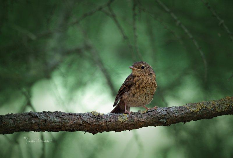 природа, лес, животные, птицы Любопытный малыш фото превью