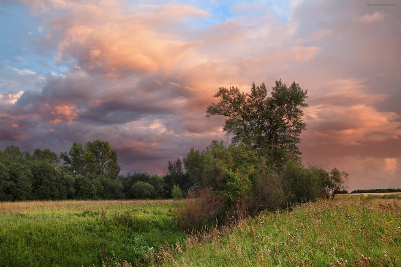лето, закат, поле, тополь, поляна, небо Летняя идиллияphoto preview