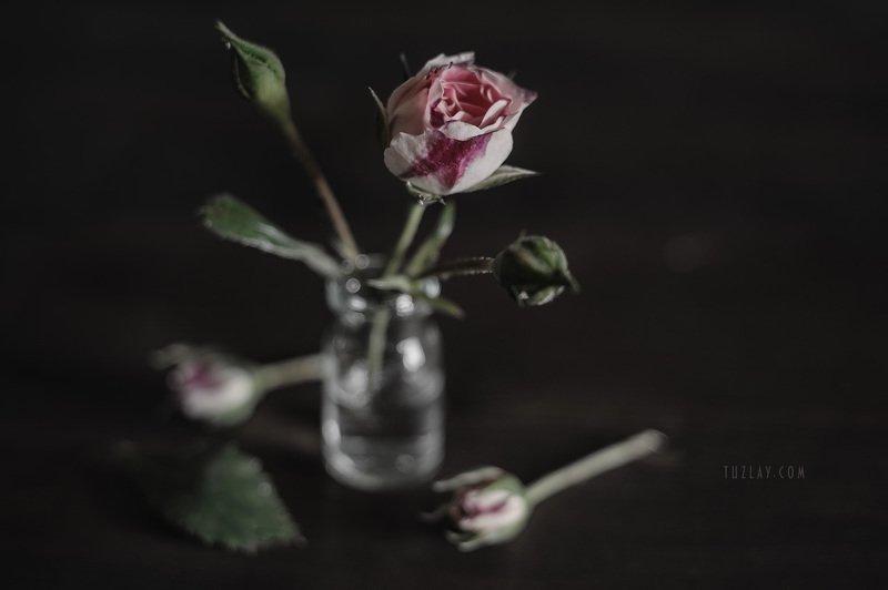 розы, маленькие розы, миниатюрные розы, кустовые розы, софт фокус, весна во флаконе Про розочки и пузырёкphoto preview