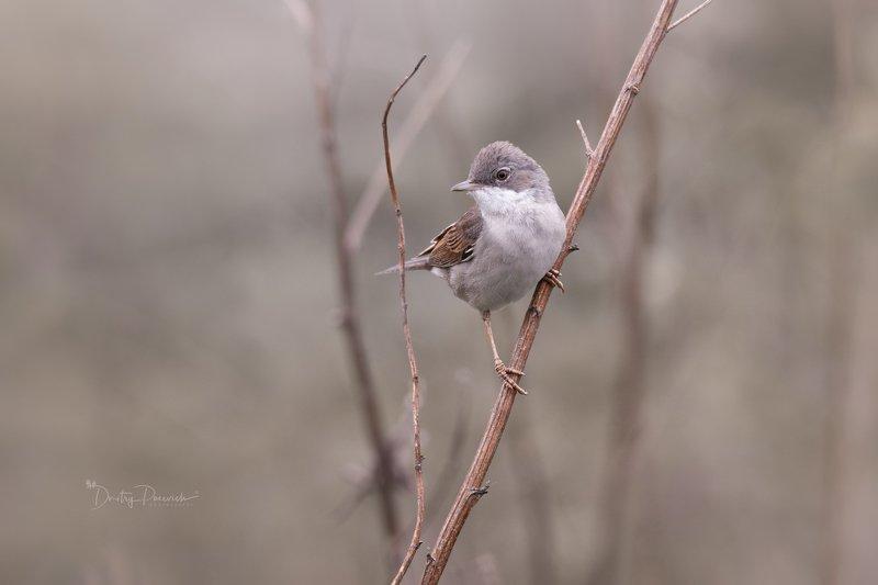 природа, лес, животные, птицы Пасмурным утром фото превью