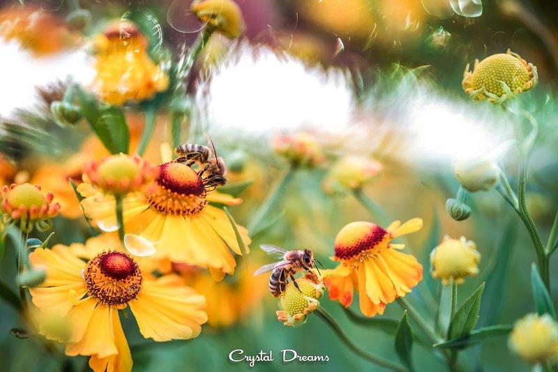 crystal dreams, macro, summer, color, art, nature, #save_the_bees, bees \