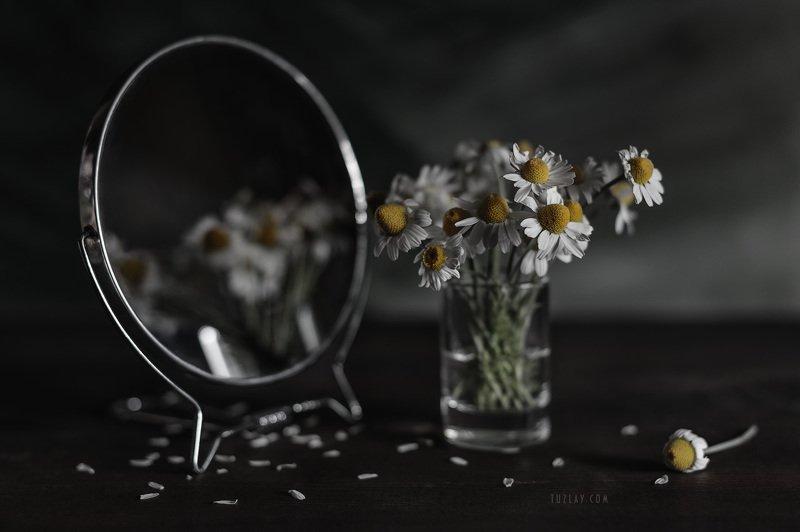 ромашки, белые ромашки, софт фокус, боке, ромашка в стакане, зеркало Про ромашки в рюмашке и зеркалоphoto preview