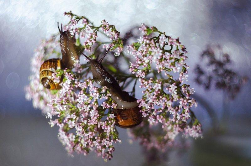 улитки, макро, цветы, гелиос, боке Улиткиphoto preview