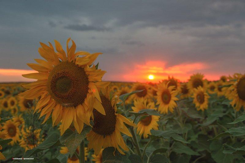 закат окончил летний,теплый вечер...photo preview