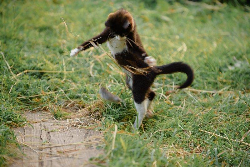 кошки-мышки, репортаж, животные Кошки-мышкиphoto preview