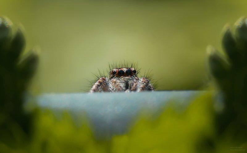 макро, природа, паук, nature, macro, spider привет )photo preview