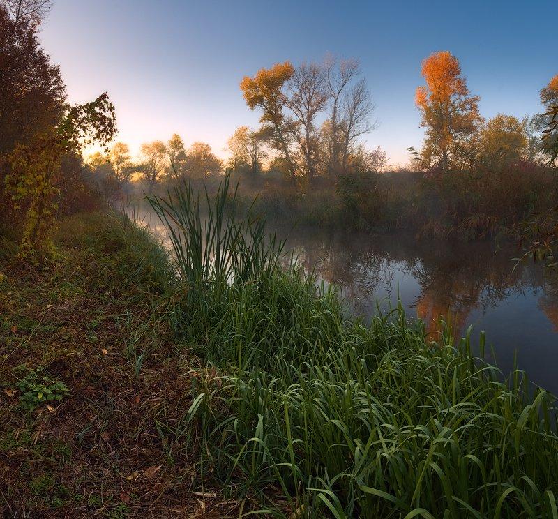 осень, утро, речка, туман, пейзаж, деревья, золото, свет, цвета осени, autumn, river, small, morning, foggy, misty, landscape, colors, fall, light, fog, hiding, corner .. там, где прячется осень ..photo preview