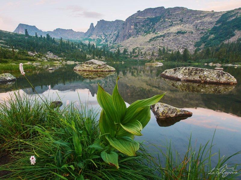 цветы, ергаки, горы Озеро Радужное, хребет Ергаки.photo preview